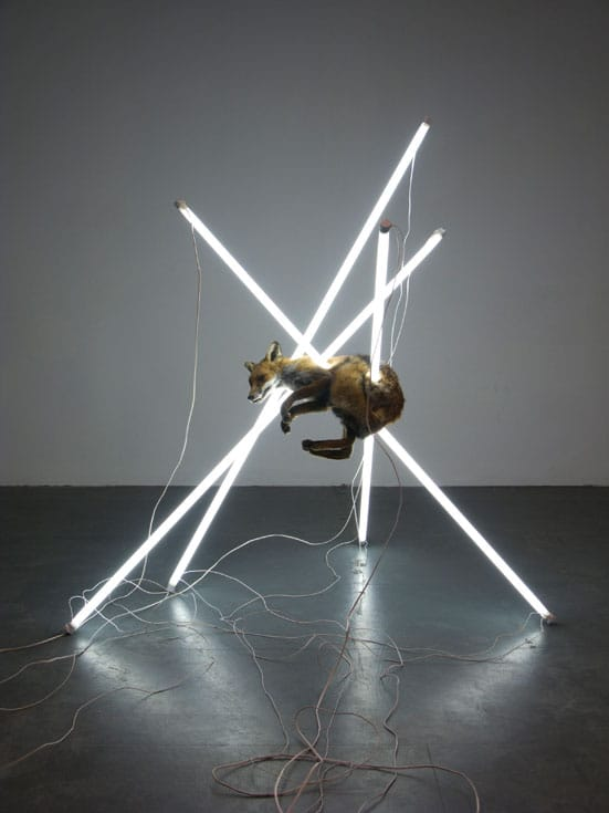 Bloomberg New Contemporaries 2008 — Steve Bishop, Suspension of Disbelief, Taxidermied fox, fluorescenttubes, electronic ballasts in wood and perspex housing, wires 170 x170 x 160cm, 2007 , In the collection of J. Helgesen, Oslo
