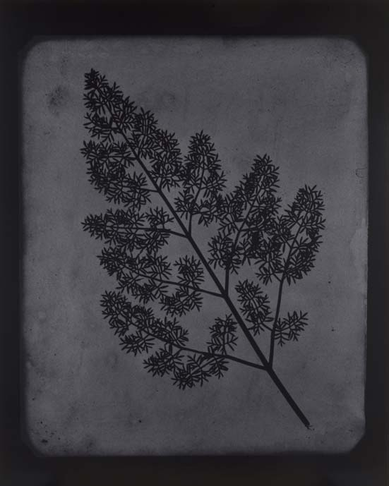 Hiroshi Sugimote: Lightning Fields and Photogenic Drawing — 